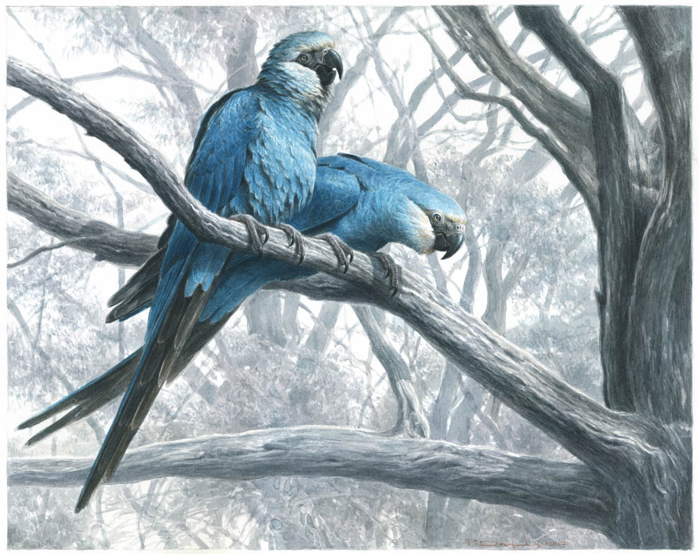 """""""The Fading Blue"""" by  Paschalis Dougalis  (watercolors on Lana cold-pressed paper)"""