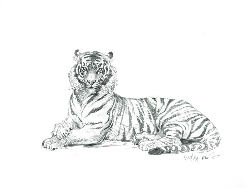 """""""Panthera Tigris Sumatrae"""" by  Wesley Burt  (graphite)"""