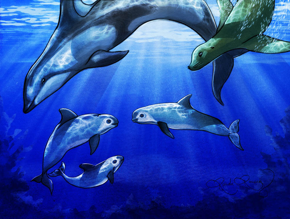 """""""Vaquita Porpoise"""" by Ronda Rousey (watercolor)"""