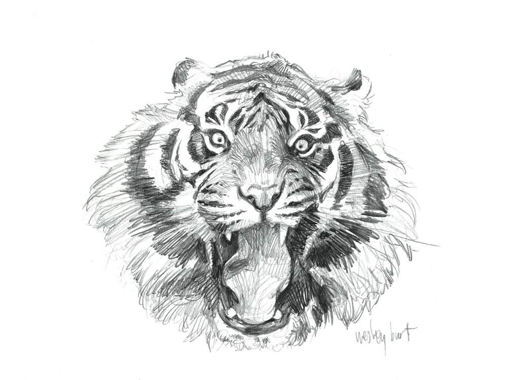"""""""Sumatran Roar"""""""
