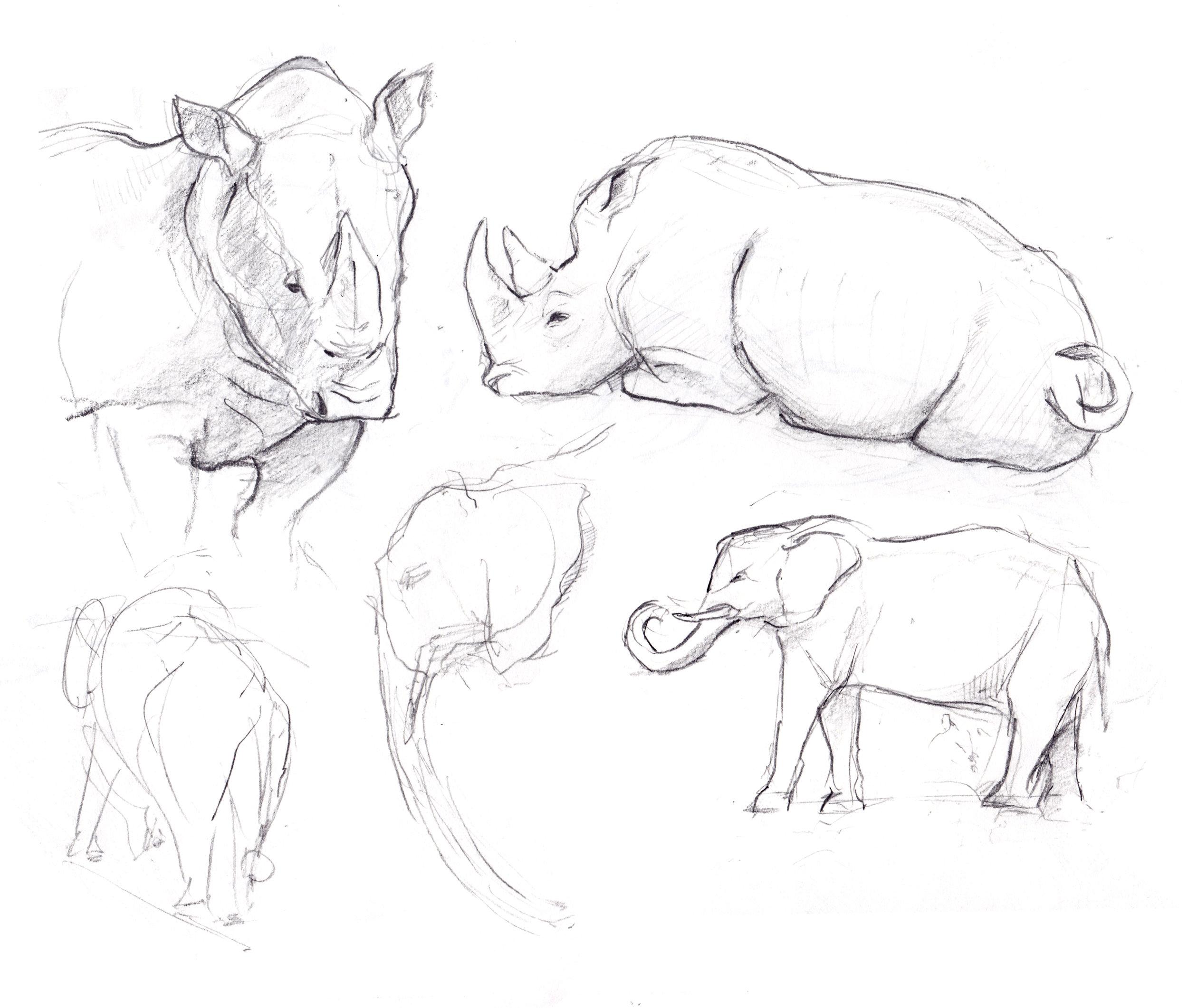 rhinoselephants.jpg