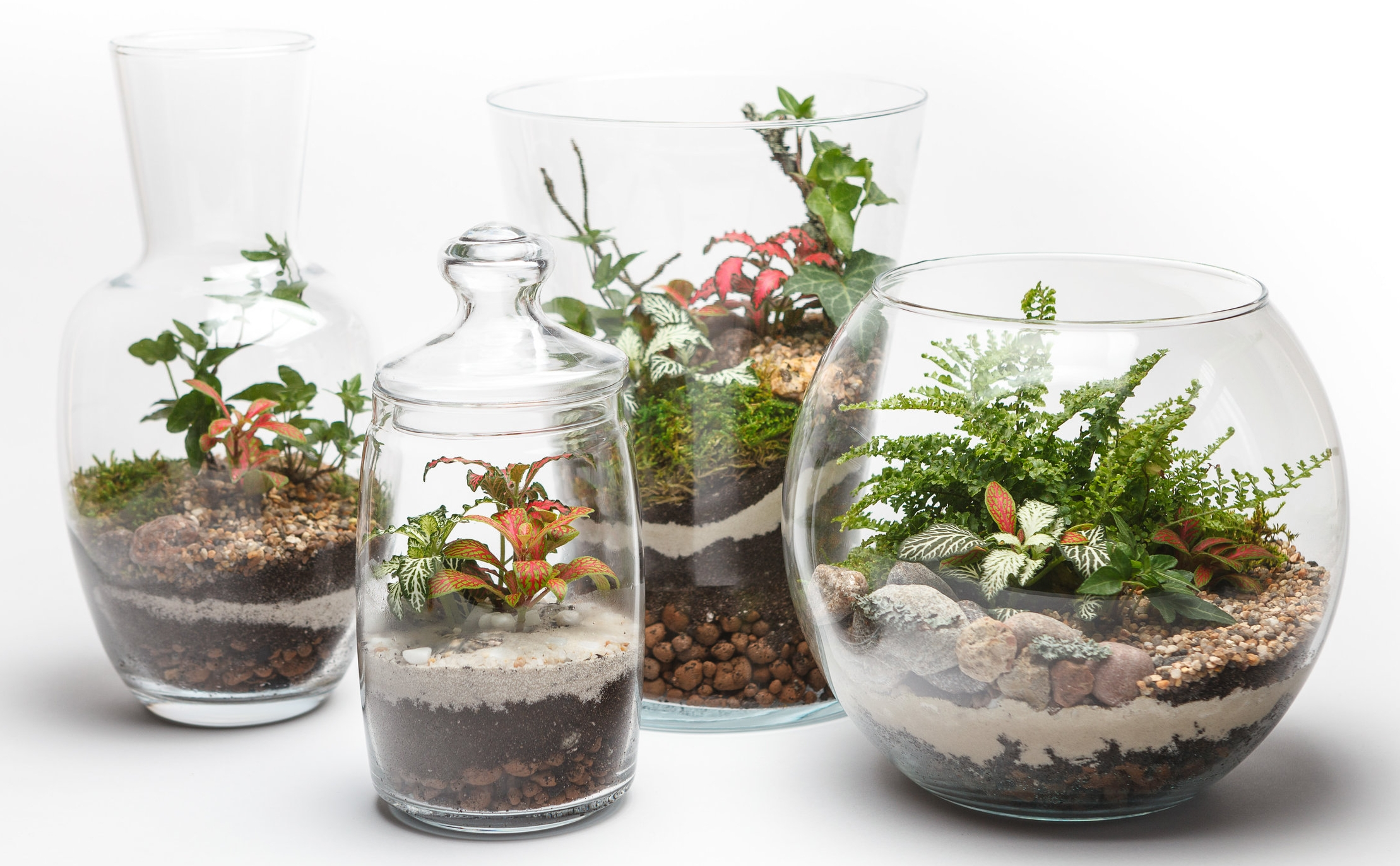 Mini gardens (terrariums) in a different glass vases isolated on white background