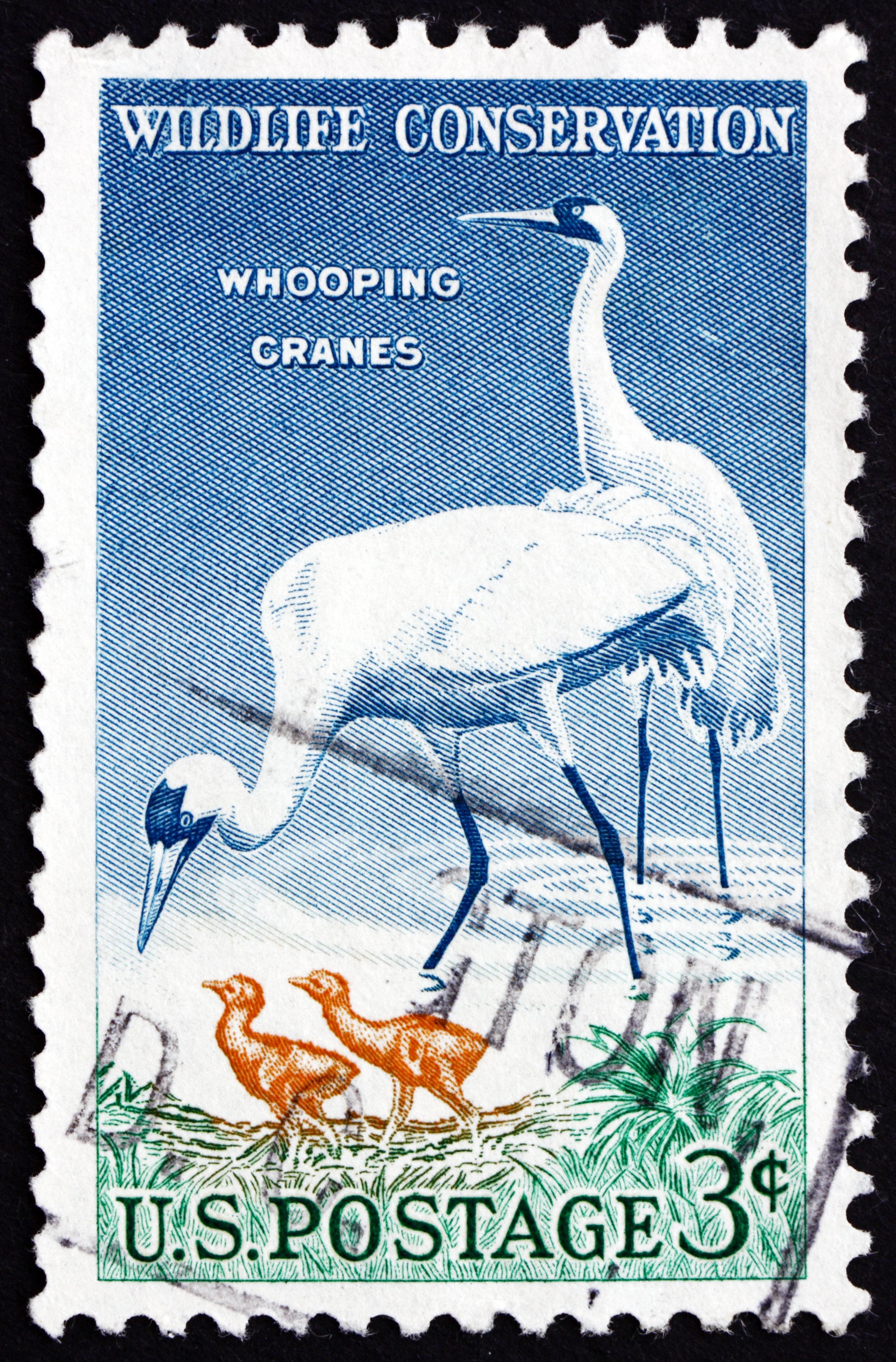 Postage stamp USA 1957 Whooping Crane, Bird