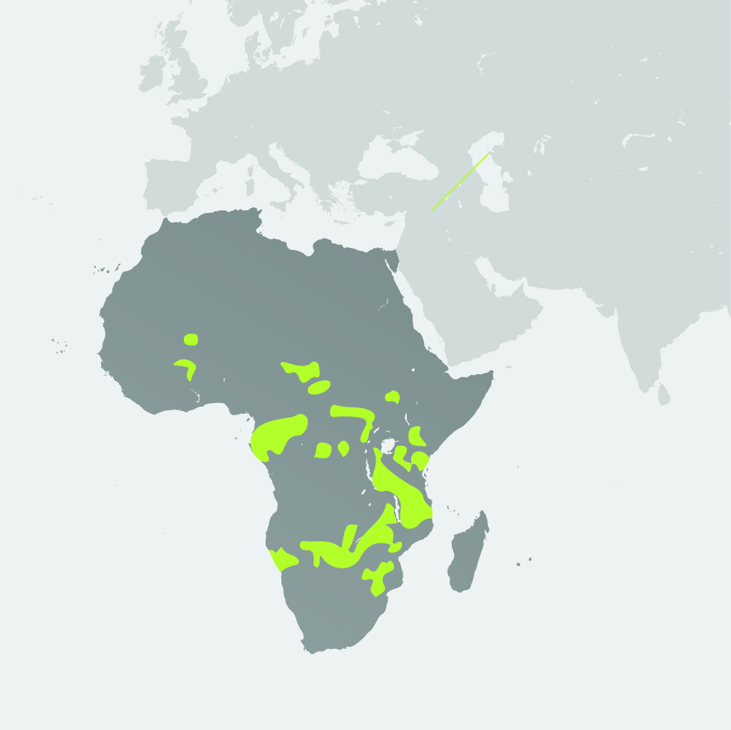 Map__African Elephant.jpg