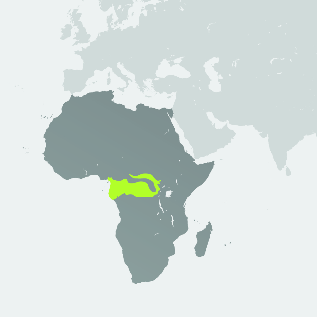 Map__African Forest Elephant.jpg