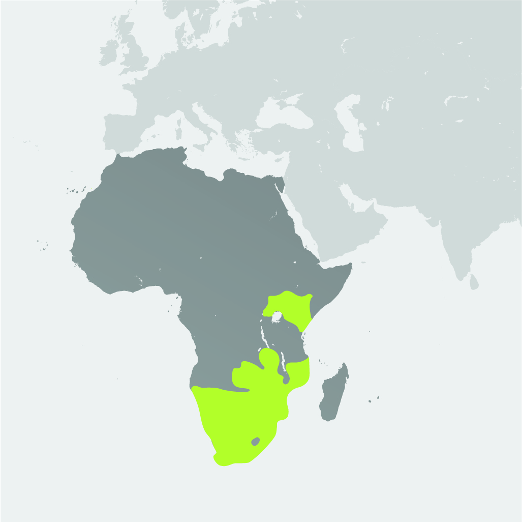 Map__White Rhinoceros.jpg