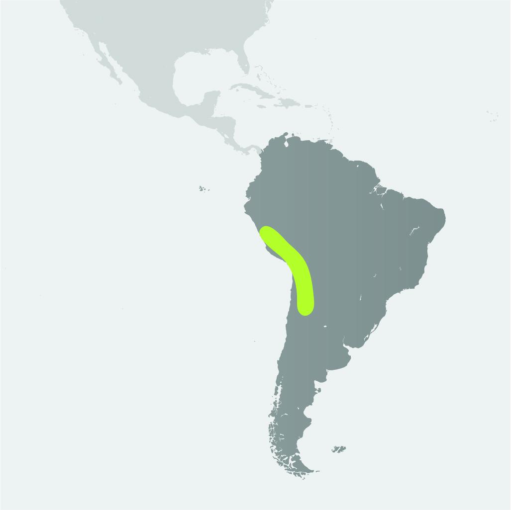 Map__Vicuna.jpg
