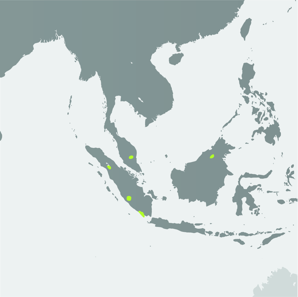 Map__Sumatran Rhino.jpg