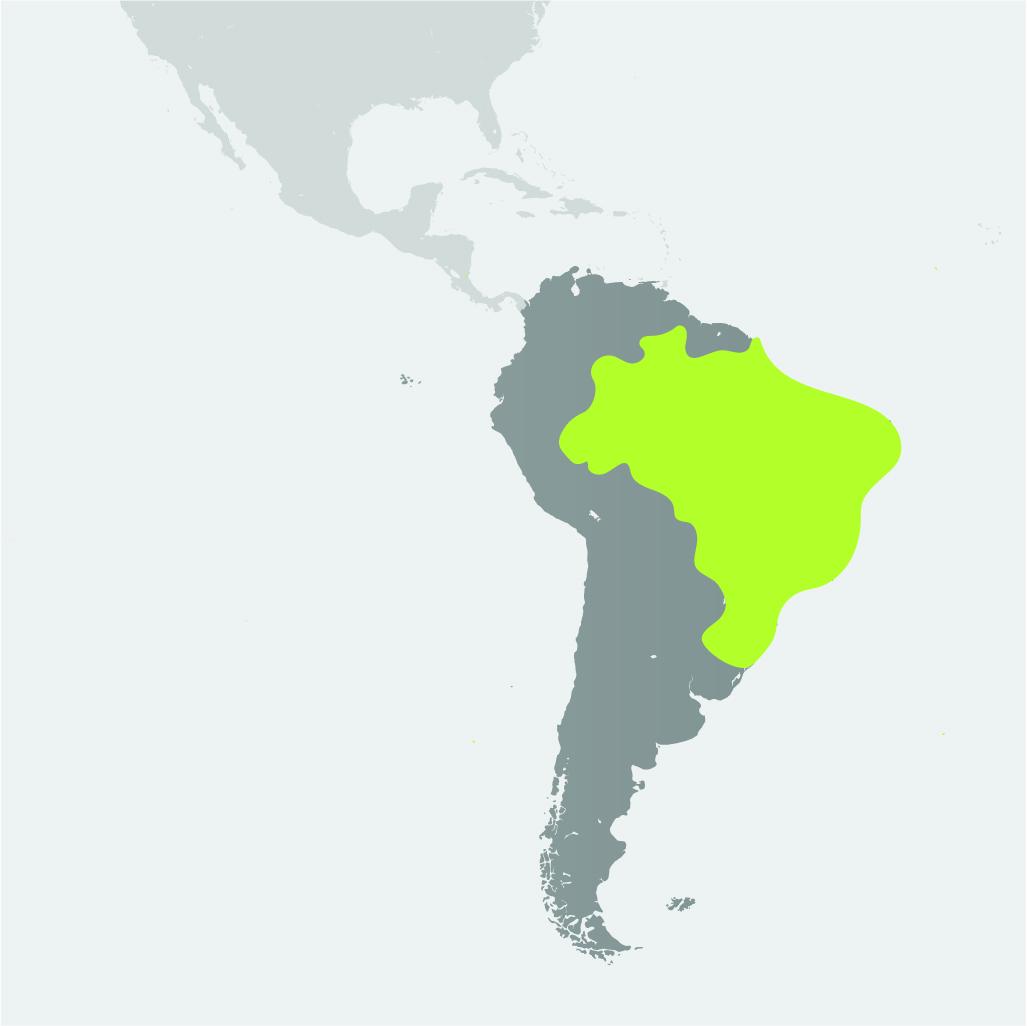 Map__Spixs Macaw.jpg