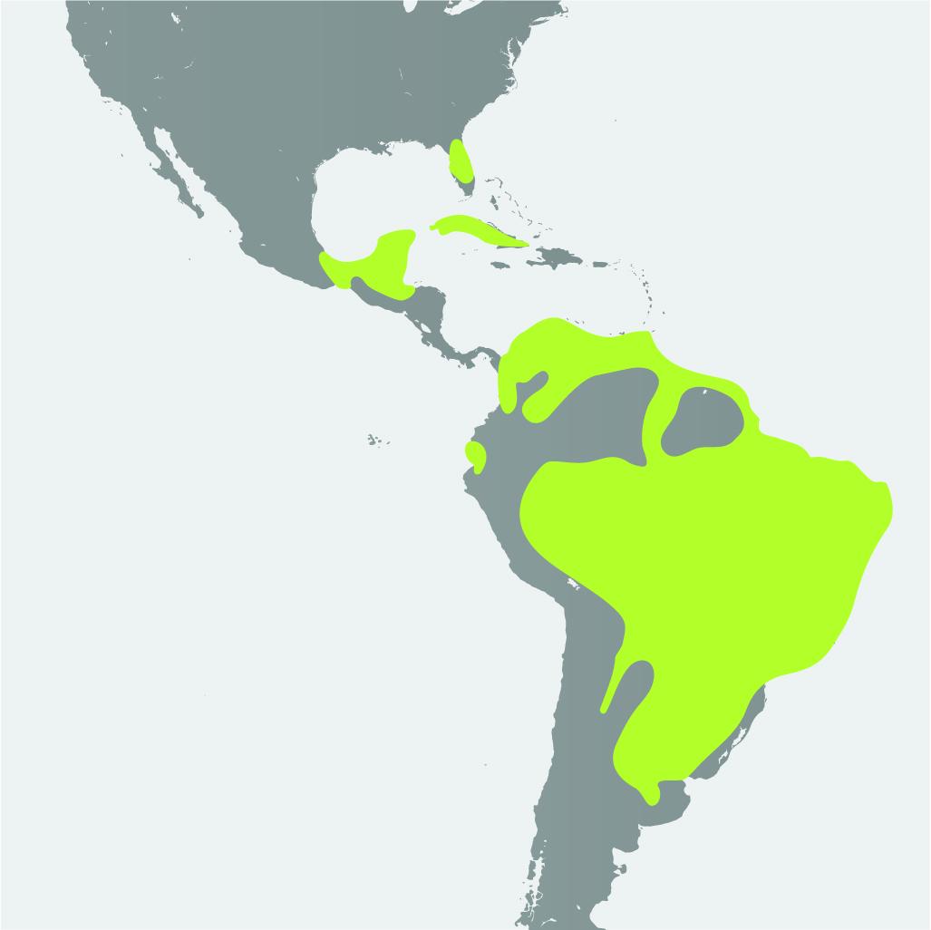 Map__Snail Kite.jpg