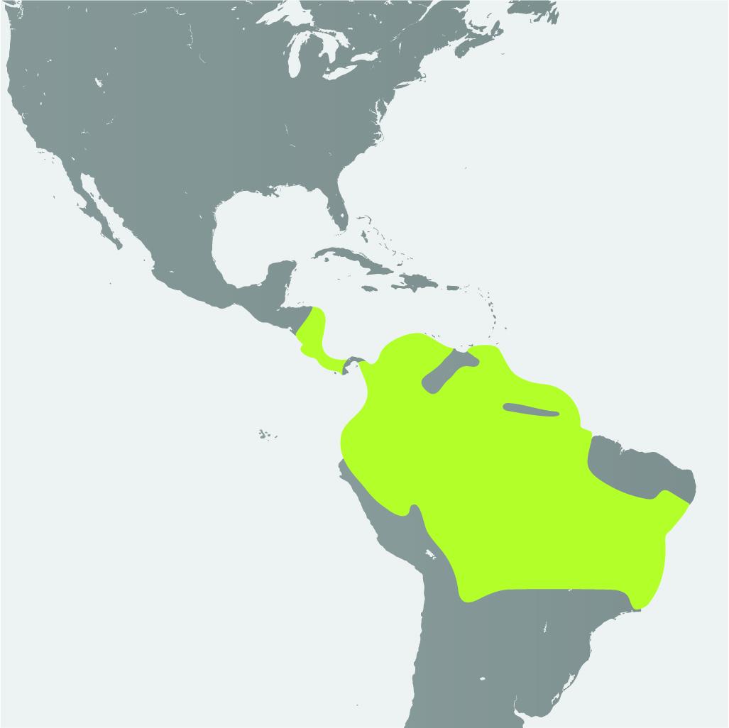 Map__Poison Dart Frog.jpg