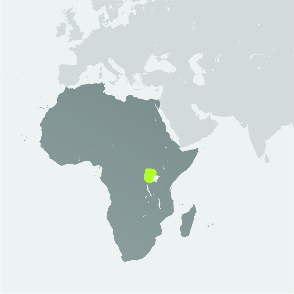 Map__Mountain Gorilla.jpg