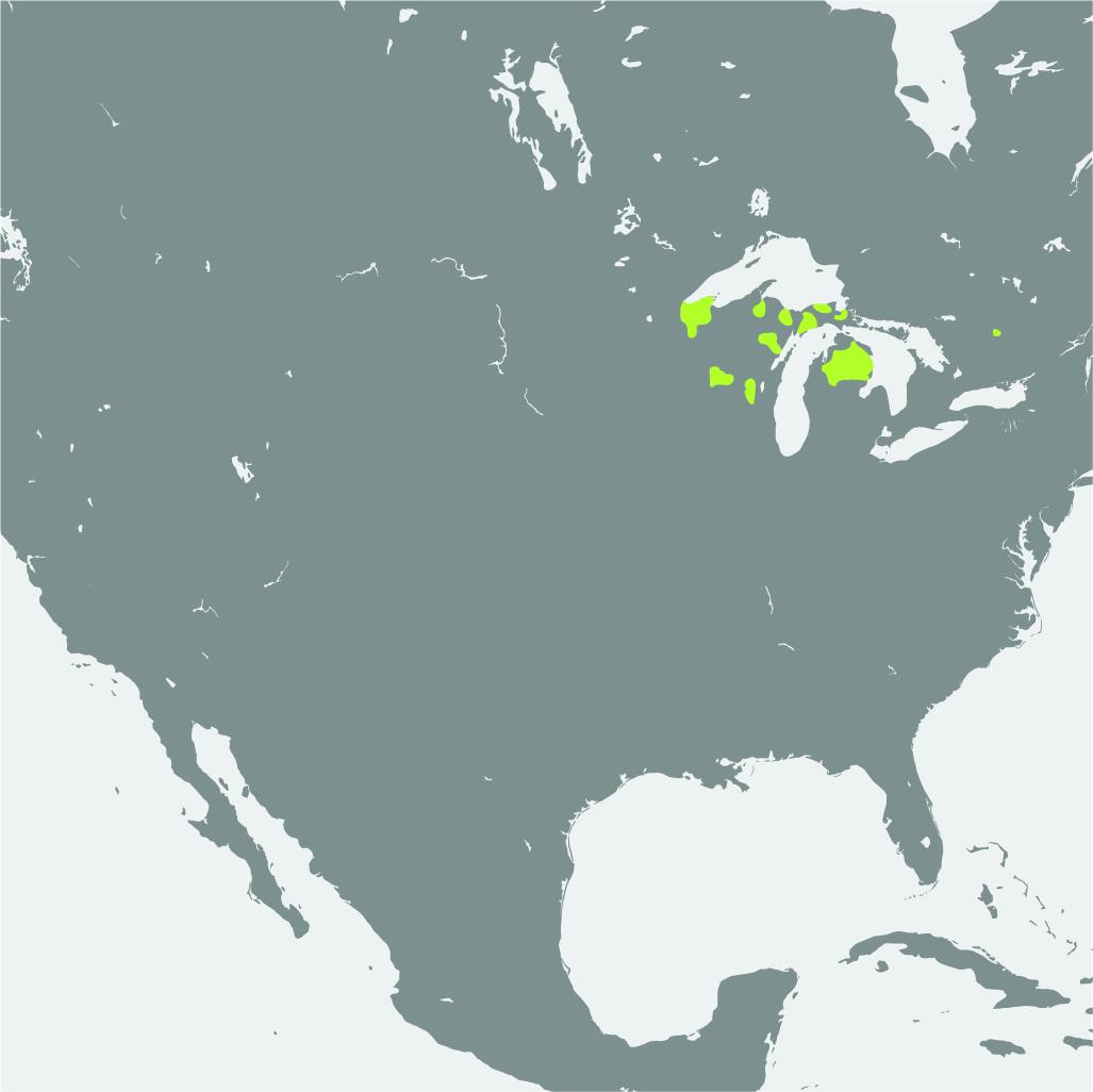 Map__Kirtlands Warbler.jpg