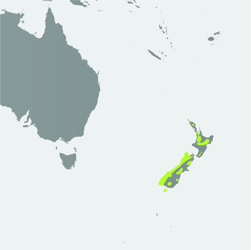 Map__Kakapo.jpg