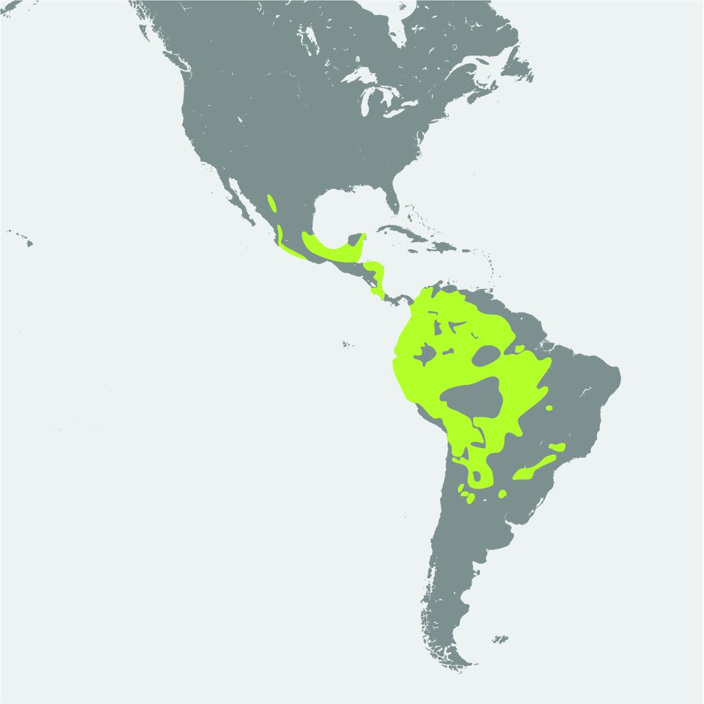Map__Jaguar.jpg