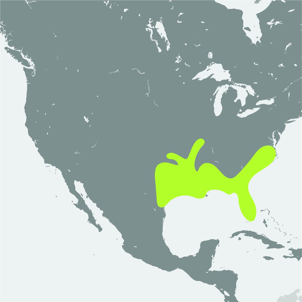 Map__Ivory Billed Woodpecker.jpg