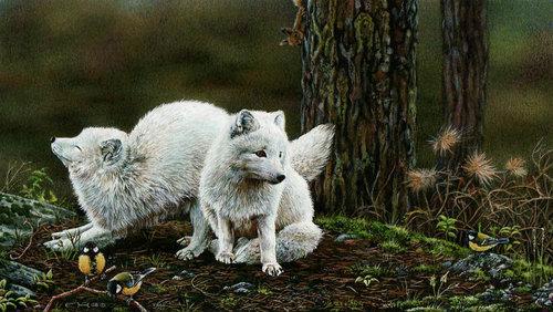 esther-arctic-fox.jpg