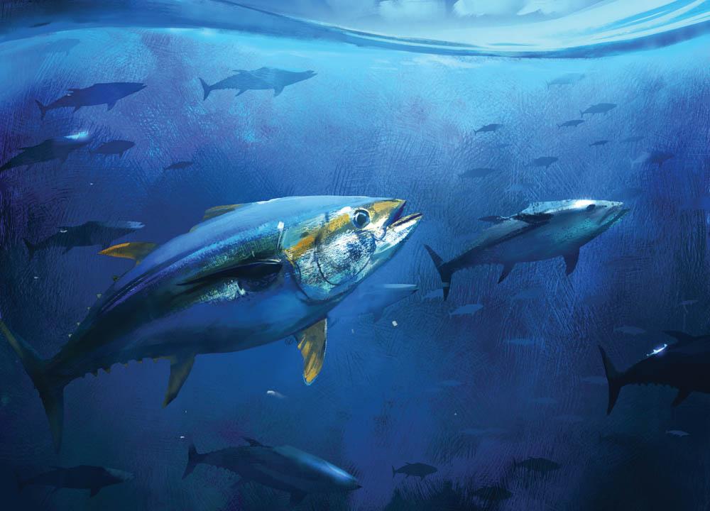 """Cornerstone of the Seas (Bigeye Tuna)"""