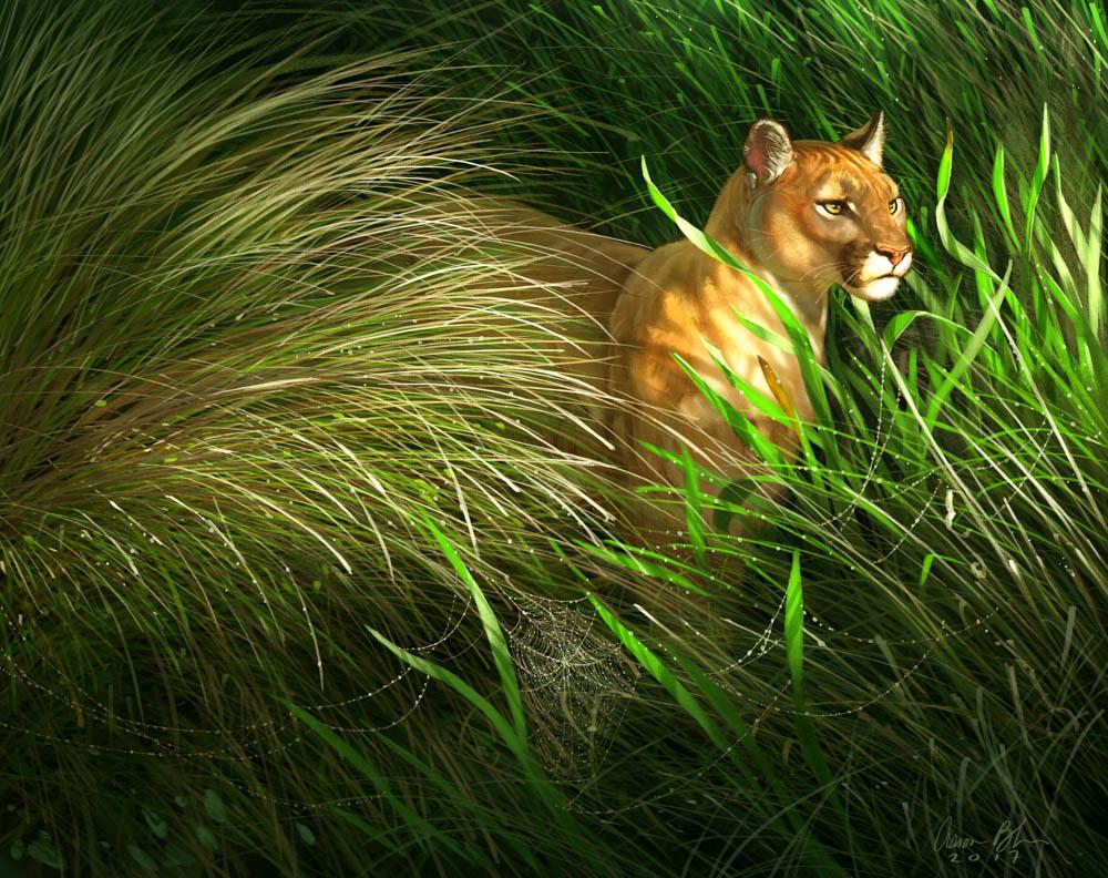 """""""Morning Dew (Florida Panther)"""""""