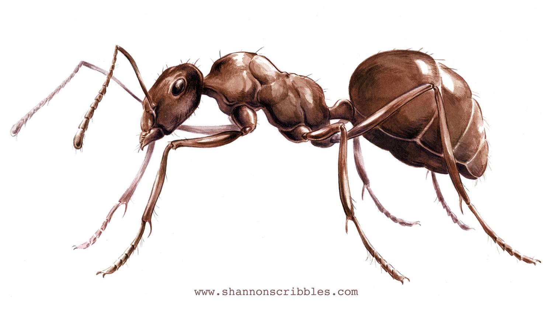 """""""Ant a Trillion"""""""
