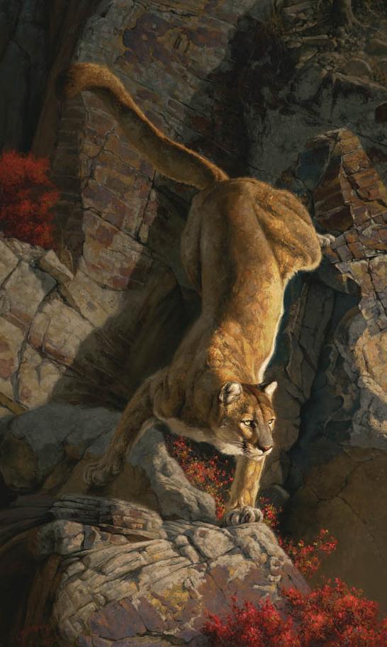 """Vantage Point (Cougar)"""