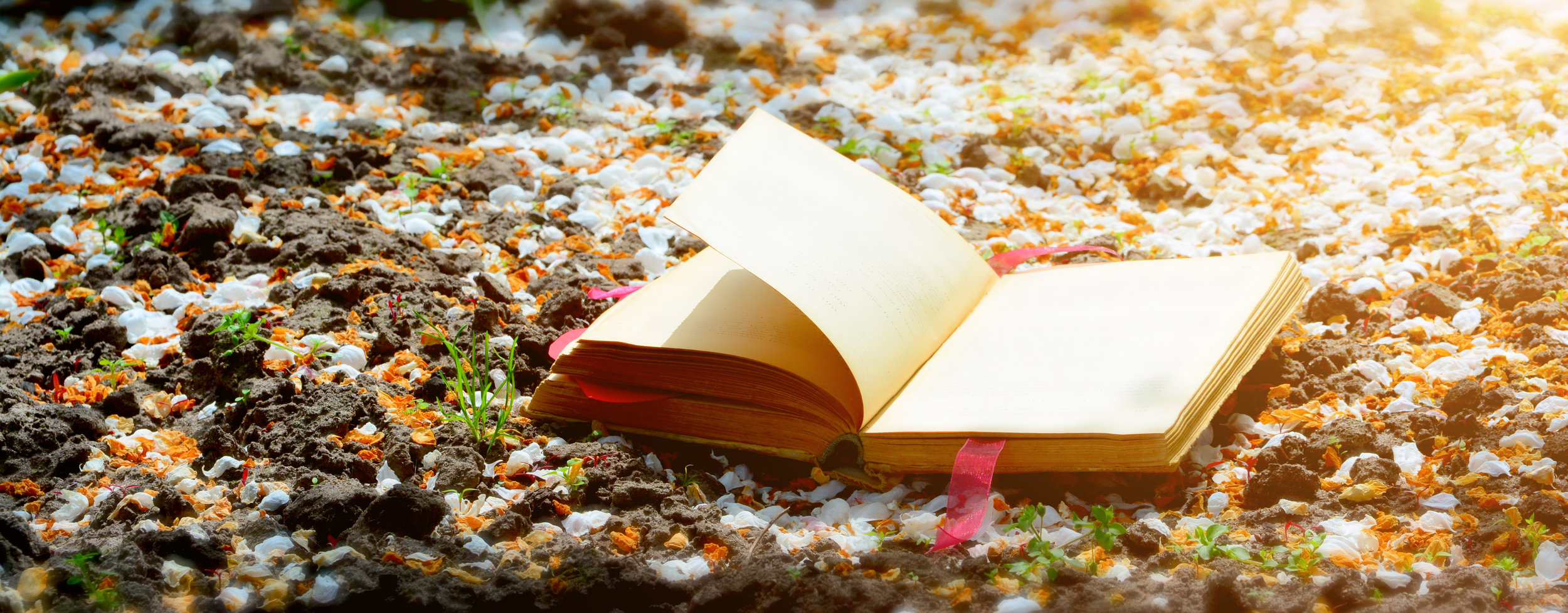 On the ground, covered with white petals is an open book with a red heart. Toning. Focus on the front of the book