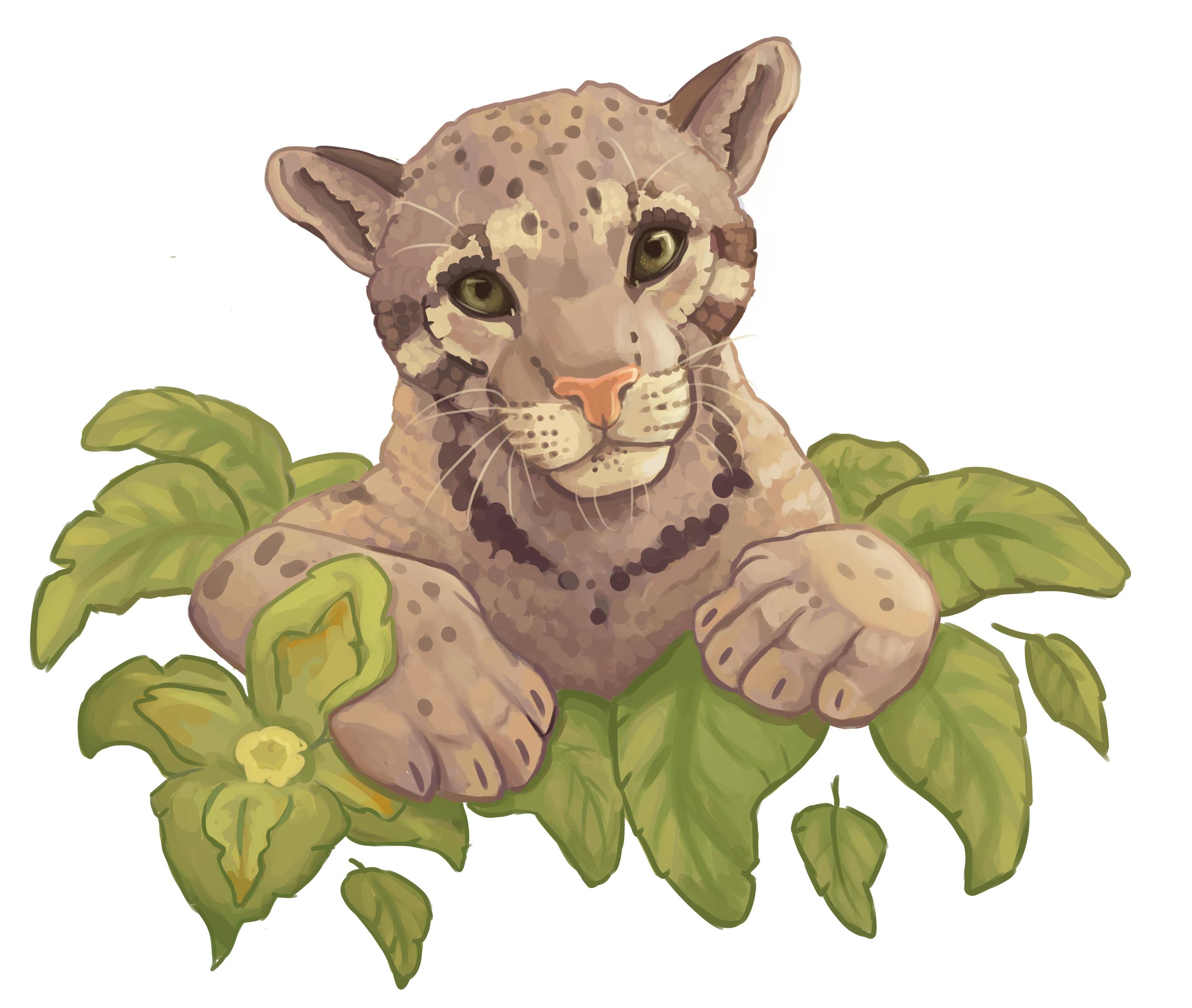 16-cloudedleopard-anna-kilvaer.png