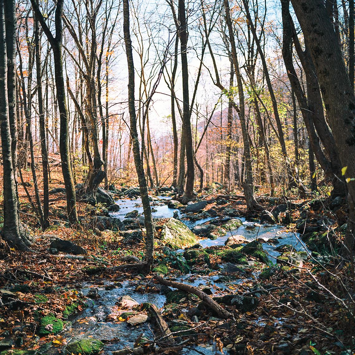 Shendoah National Park, Virginia, 2013