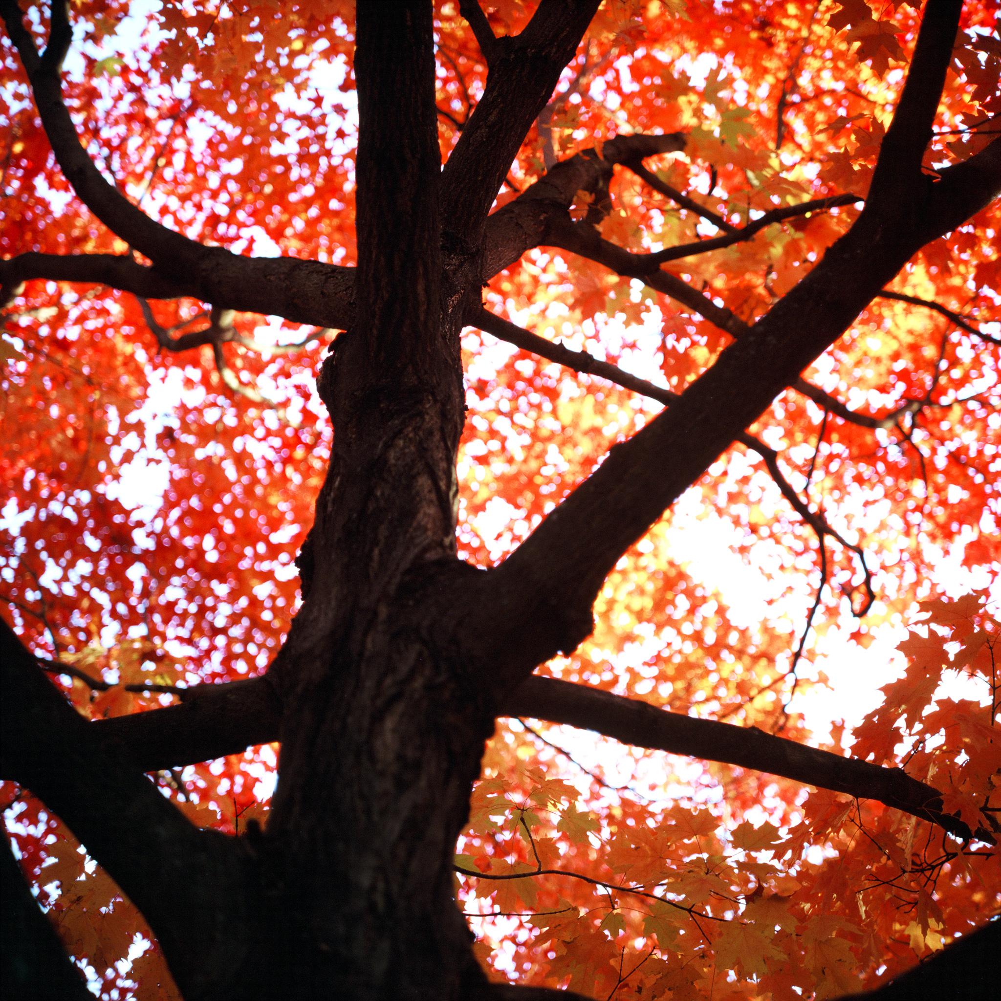 tree_2016_e100gx-2.jpg