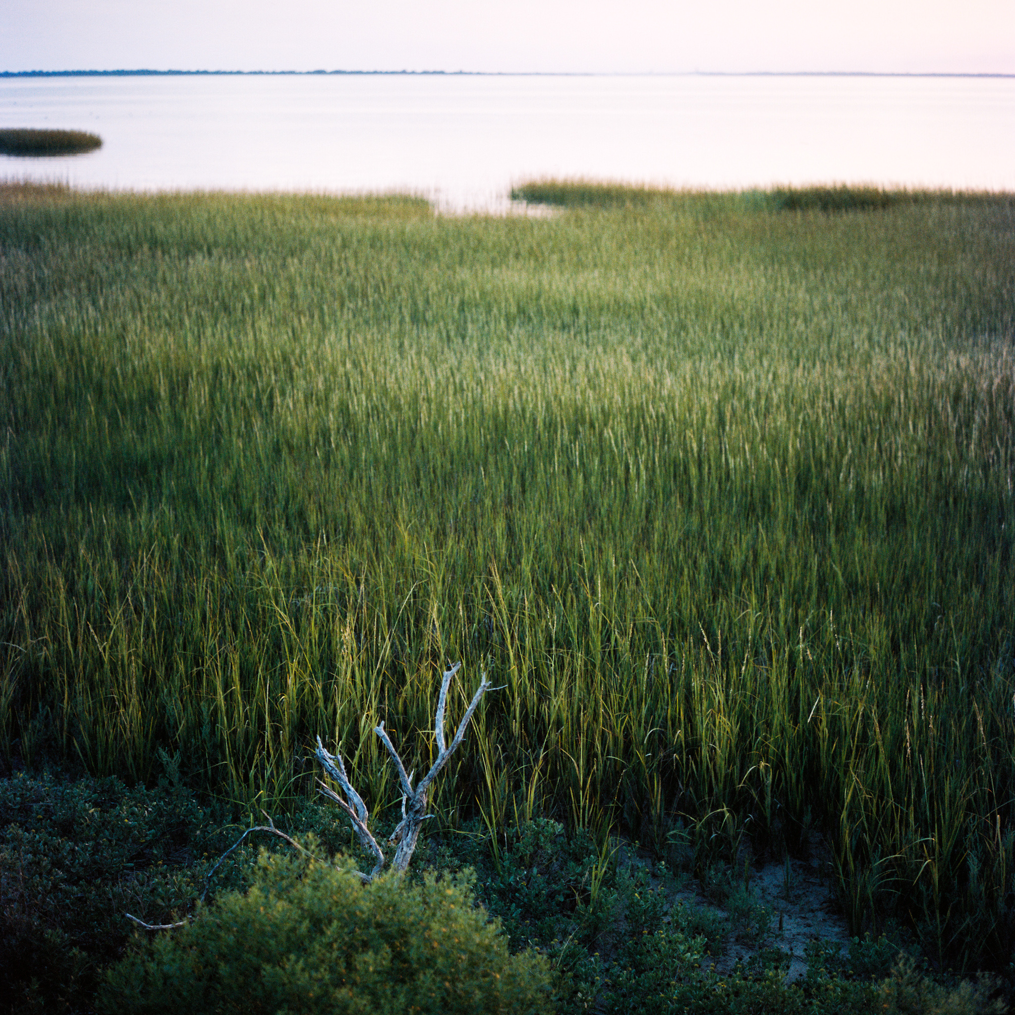 Wetland #2, Chincoteague, VA, 2016
