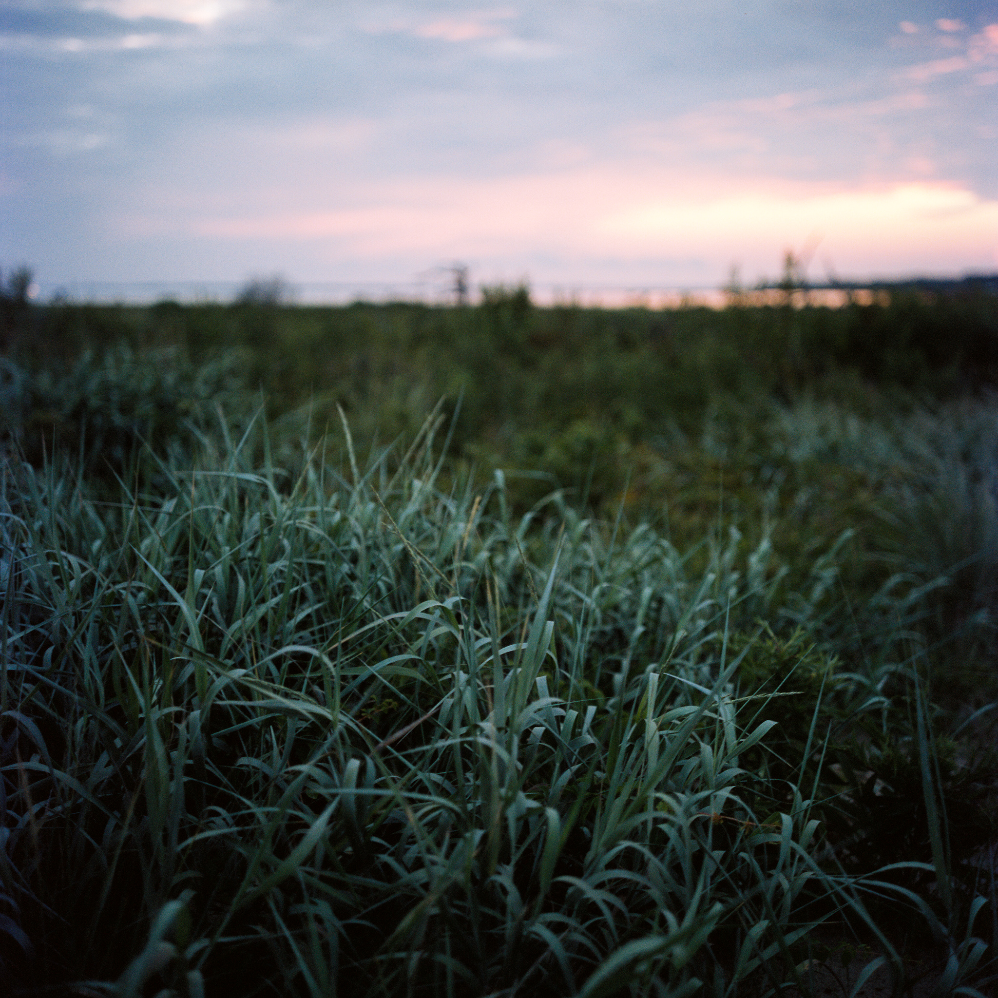Wetland #3, Chincoteague, VA, 2016