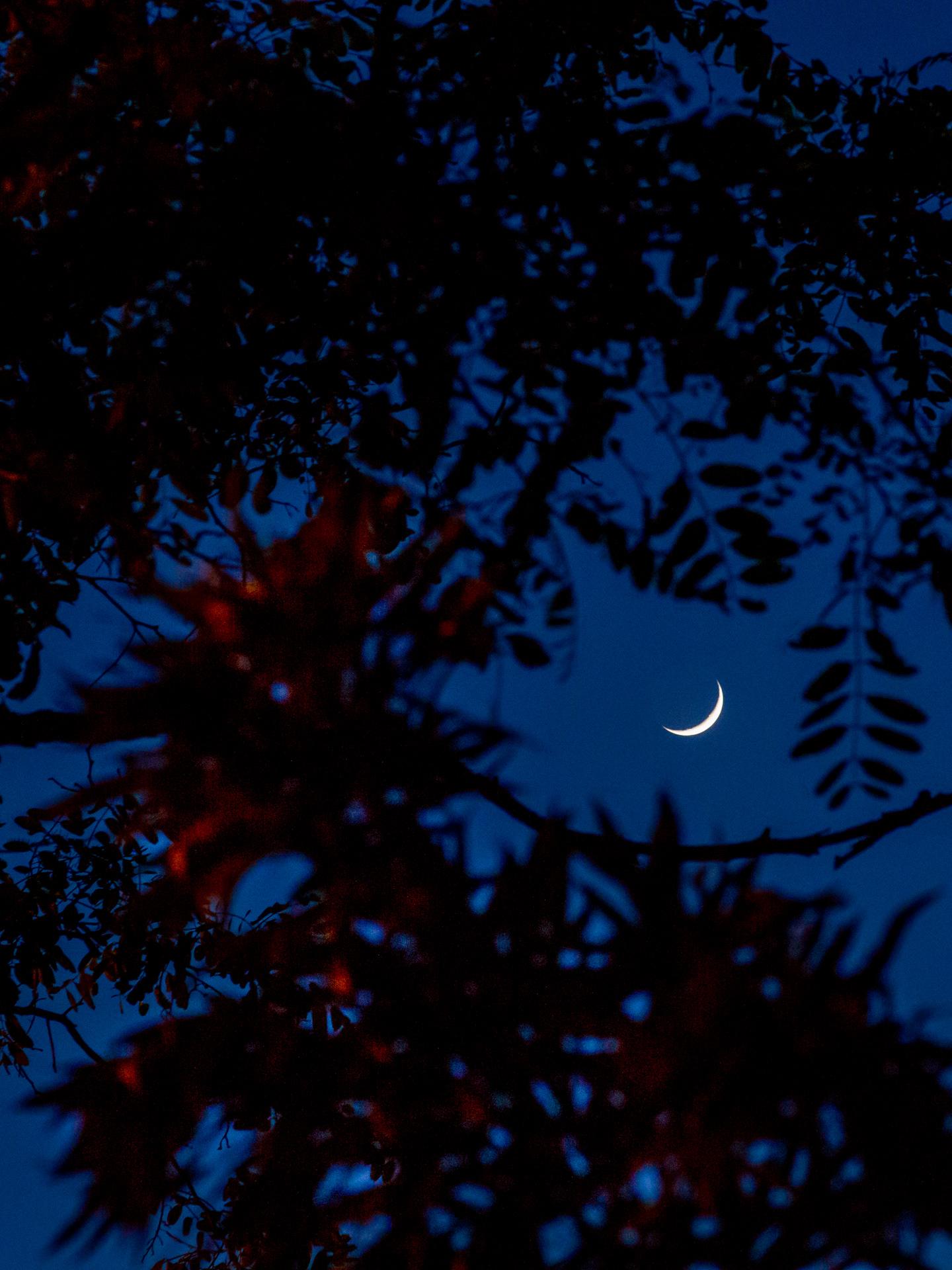 Moon through Trees | 20190507 2034 W:38.96x77.00@77m