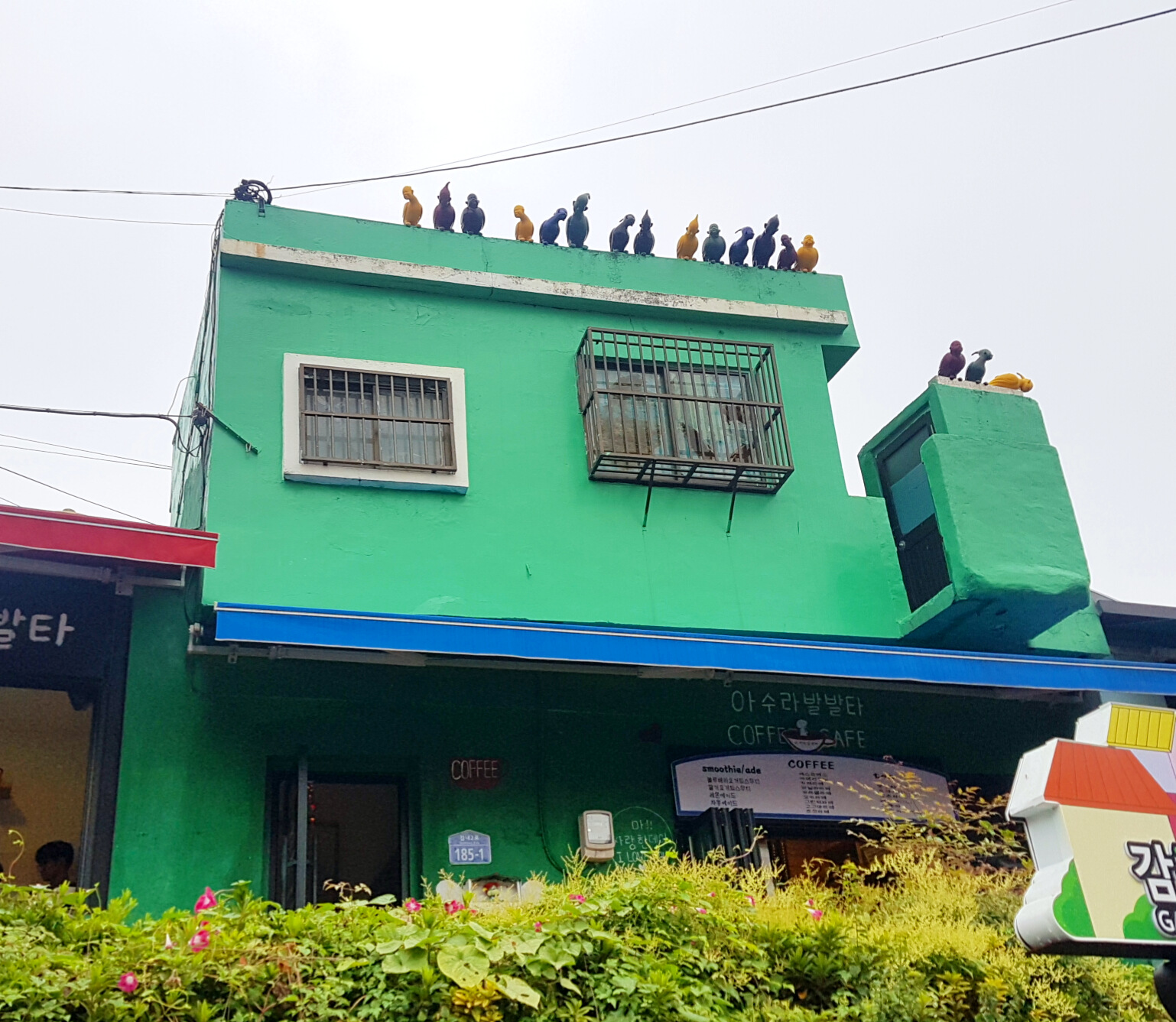 Parrots chilling on the roof. Many houses ands streets are filled fun, unexpected details.