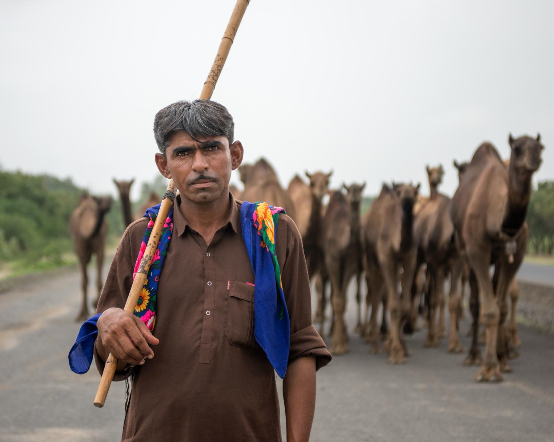 camelSheperd.jpg