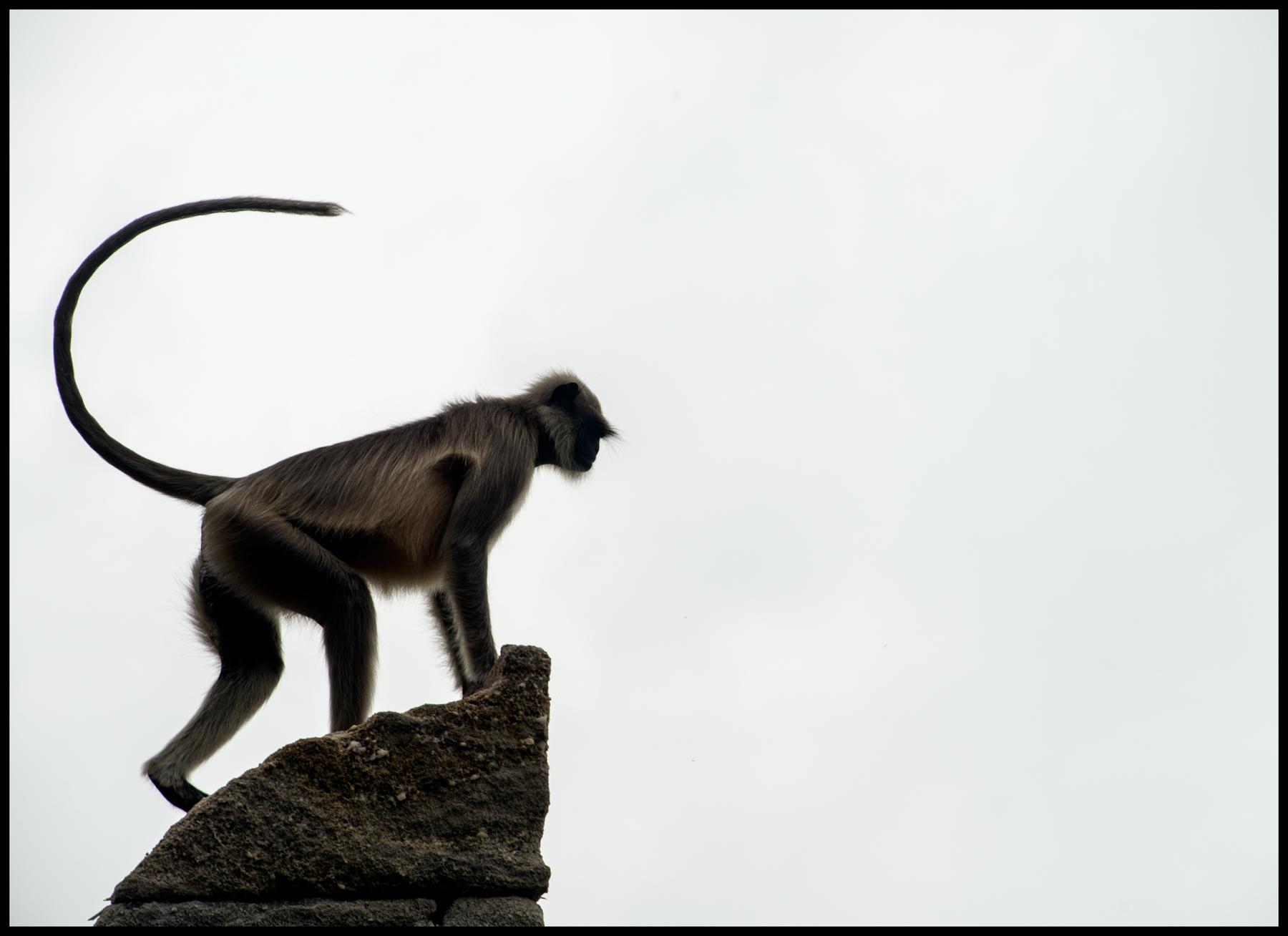 monkeyOnTheWatch.jpg