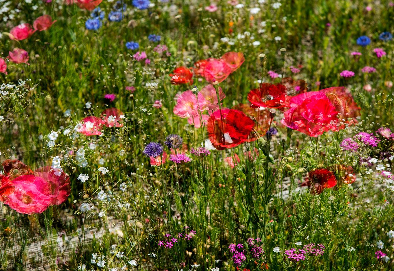 FLOWERS-EXPERIMENTAL46.jpg
