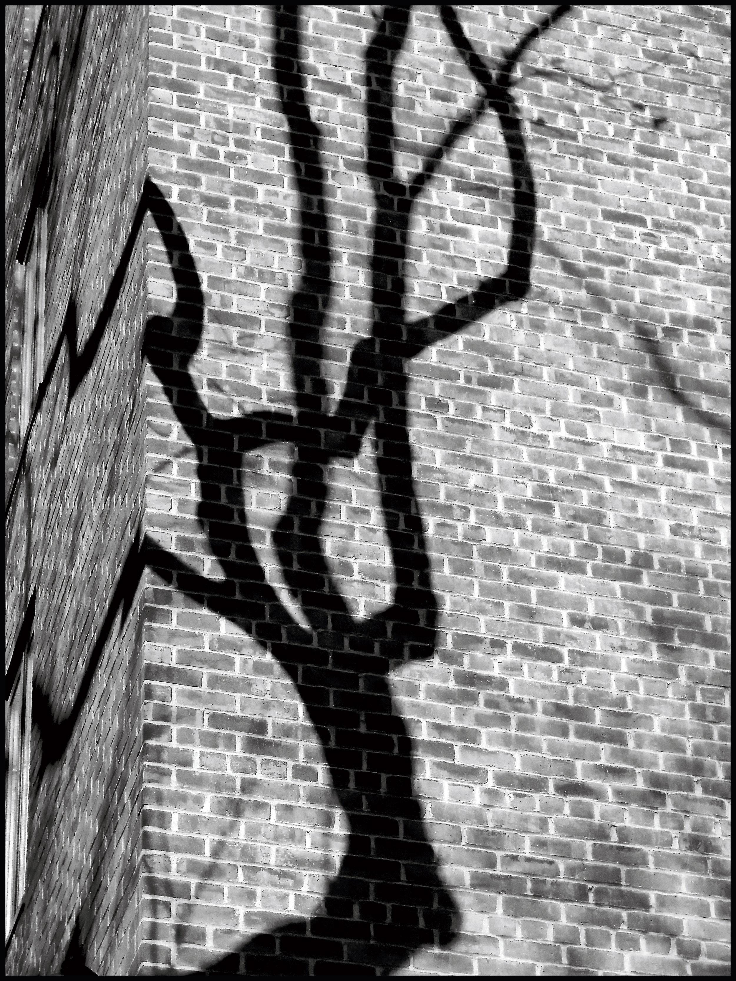 Shadow----.jpg