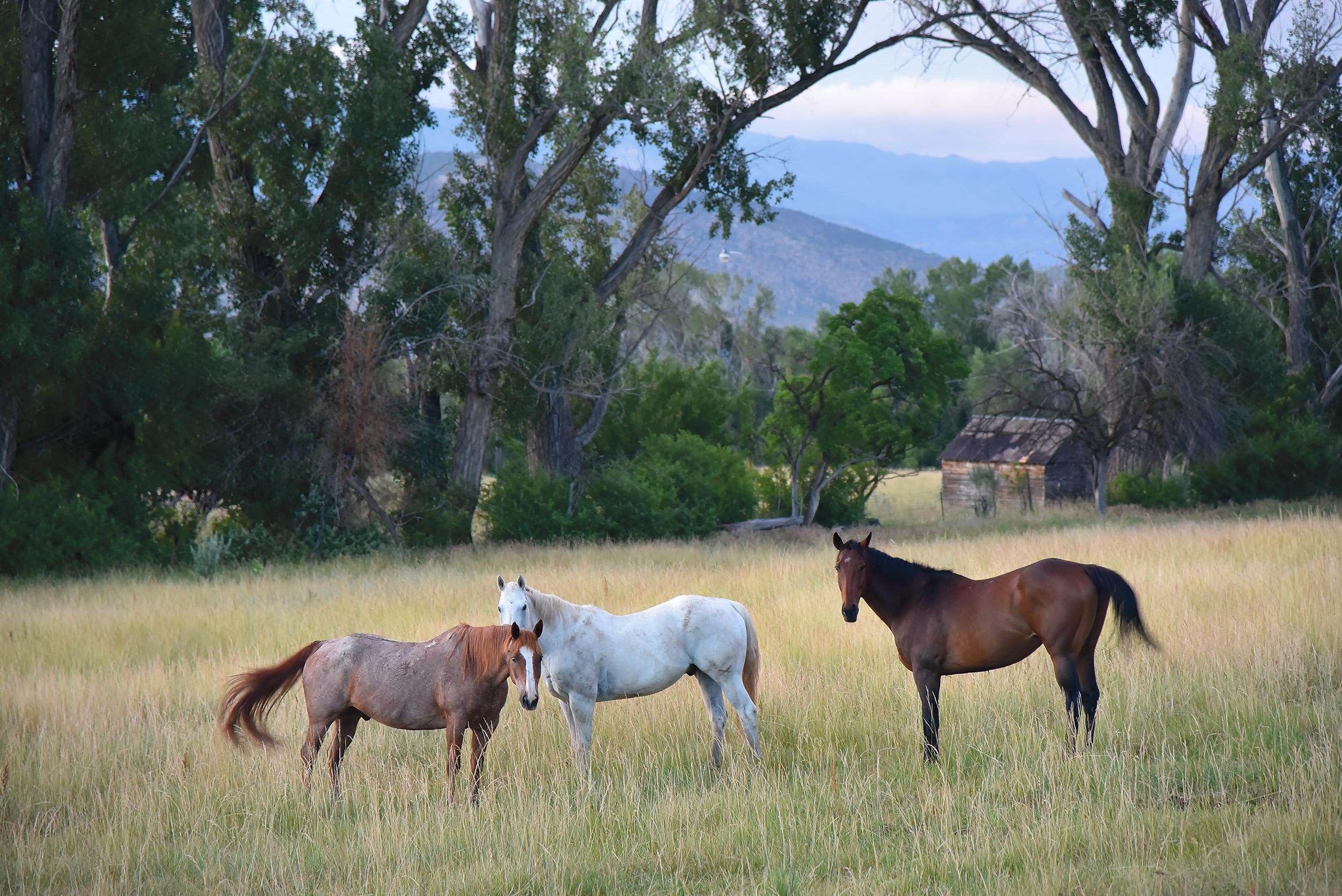 three-horses.jpg