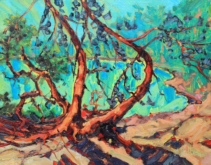 Pike bay Pines.jpg