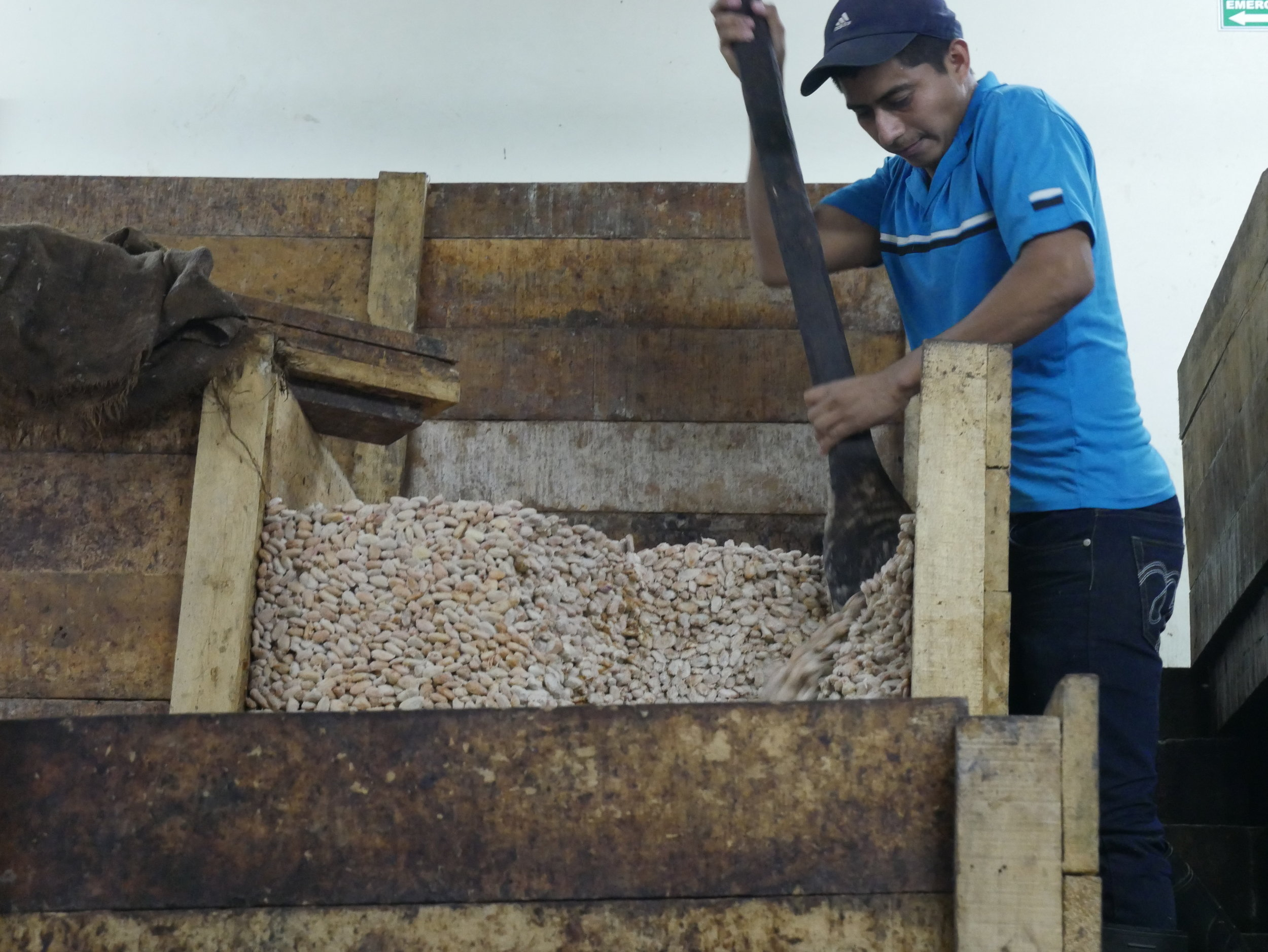 farmer empowerment - We partner with a cacao farmer co-op in Honduras and five domestic farm families.