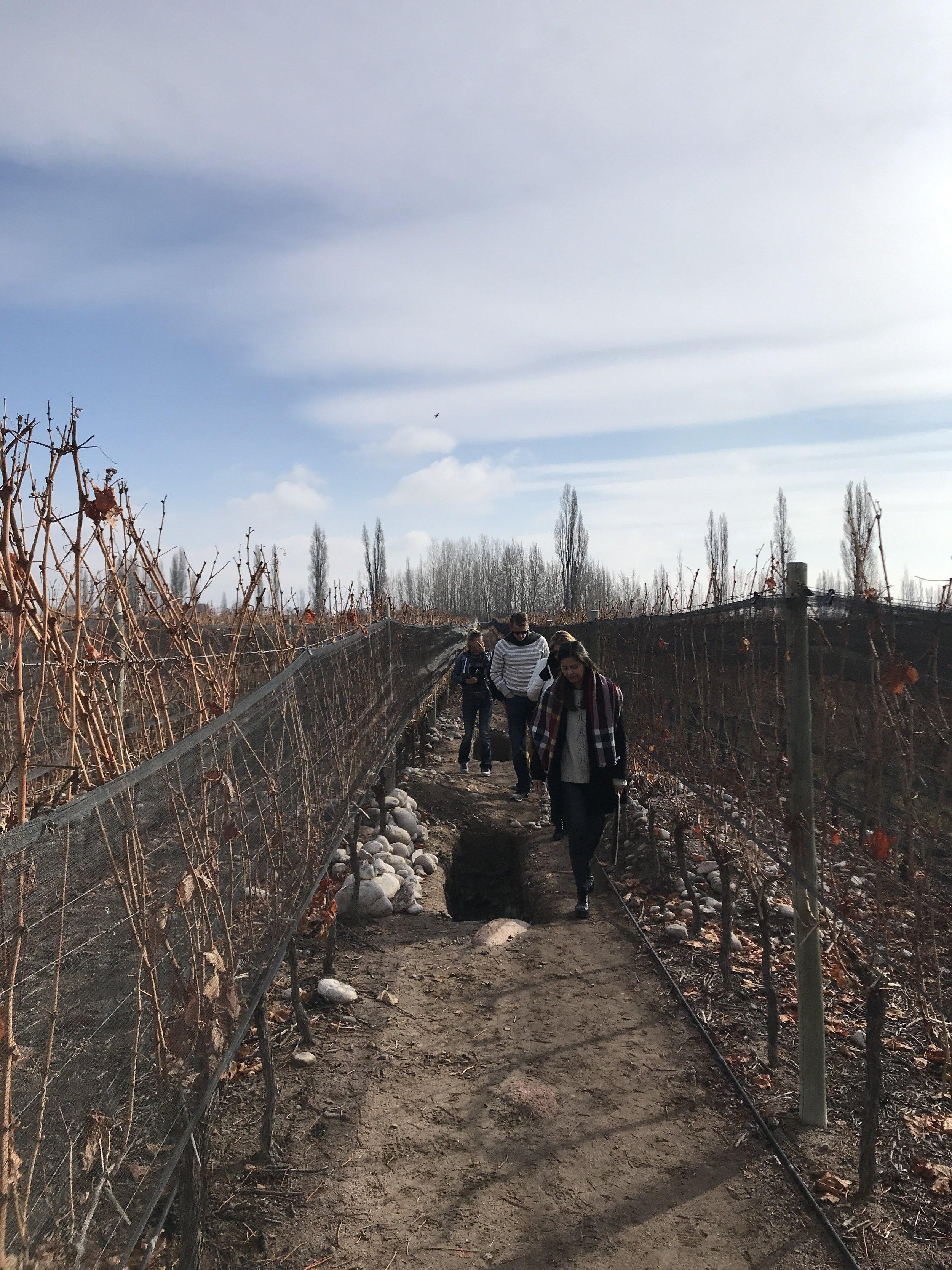 Calicatas  in Zuccardi winery