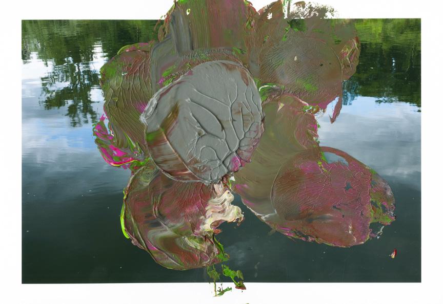 Waterlily001.jpg