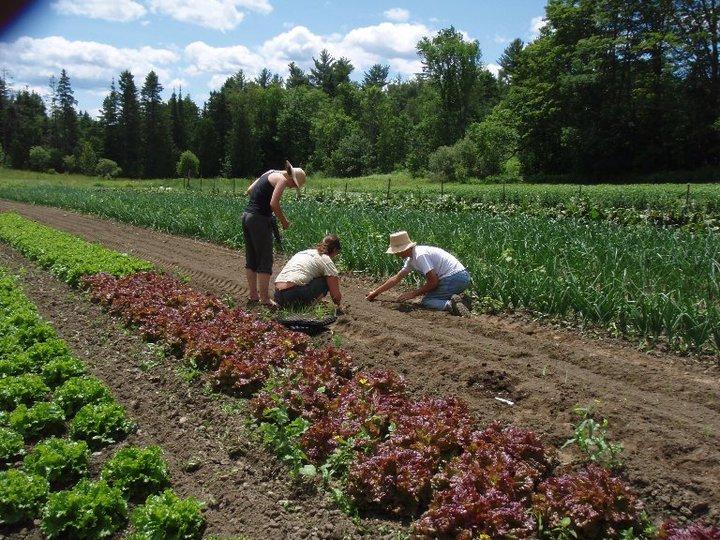 Hazendale Farm