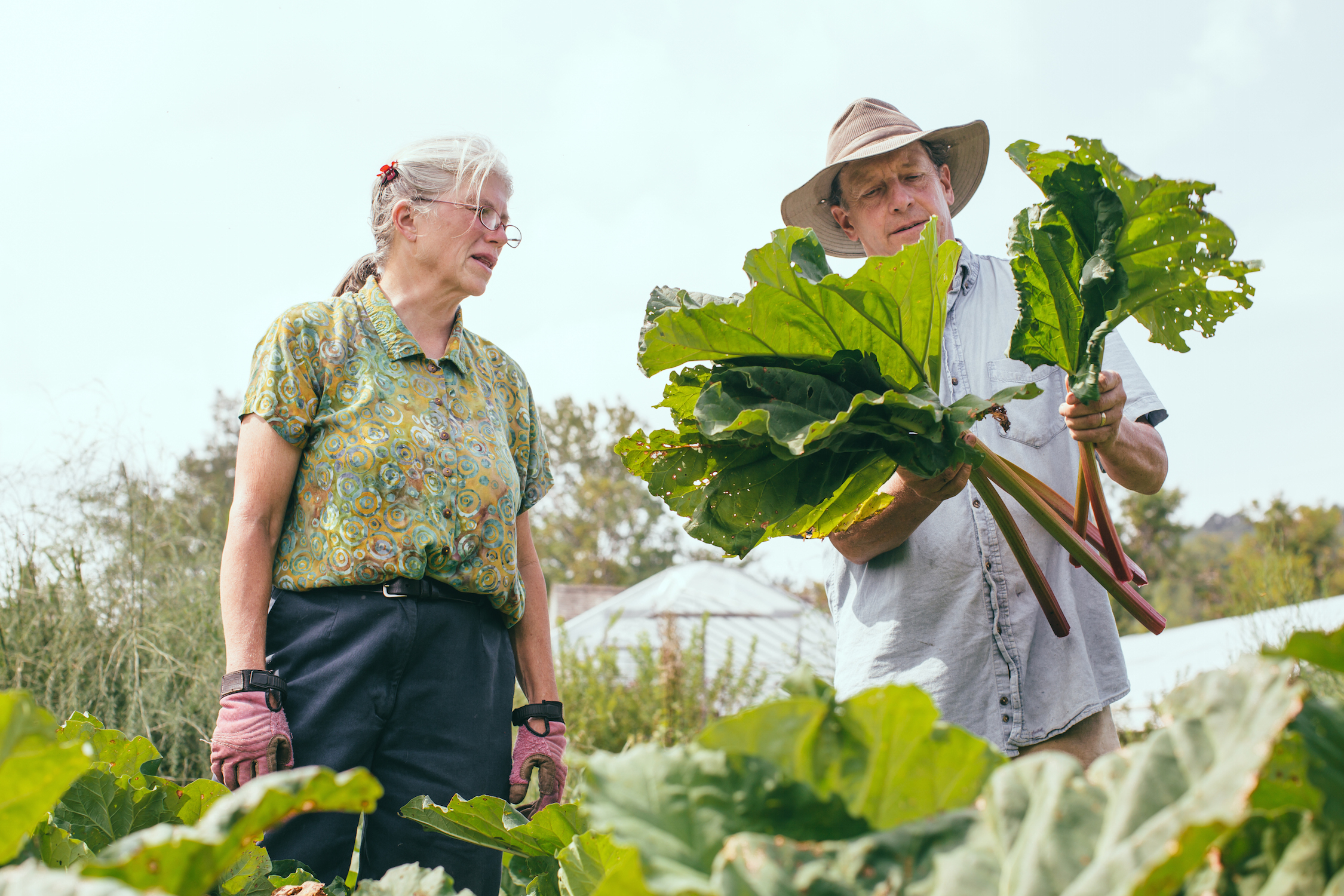 John and Nancy The Farm Between rhubarb