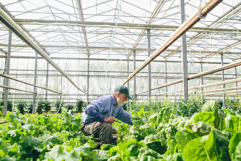 David Miskell Miskells Premium Organics