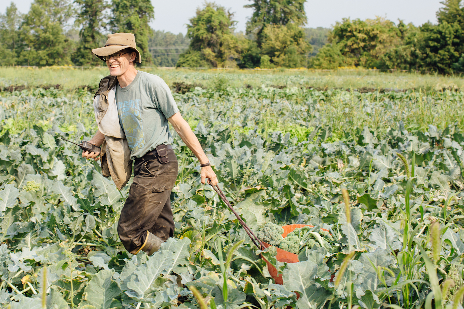 Andy Jones Harvesting Broccoli at Intervale Community Farm