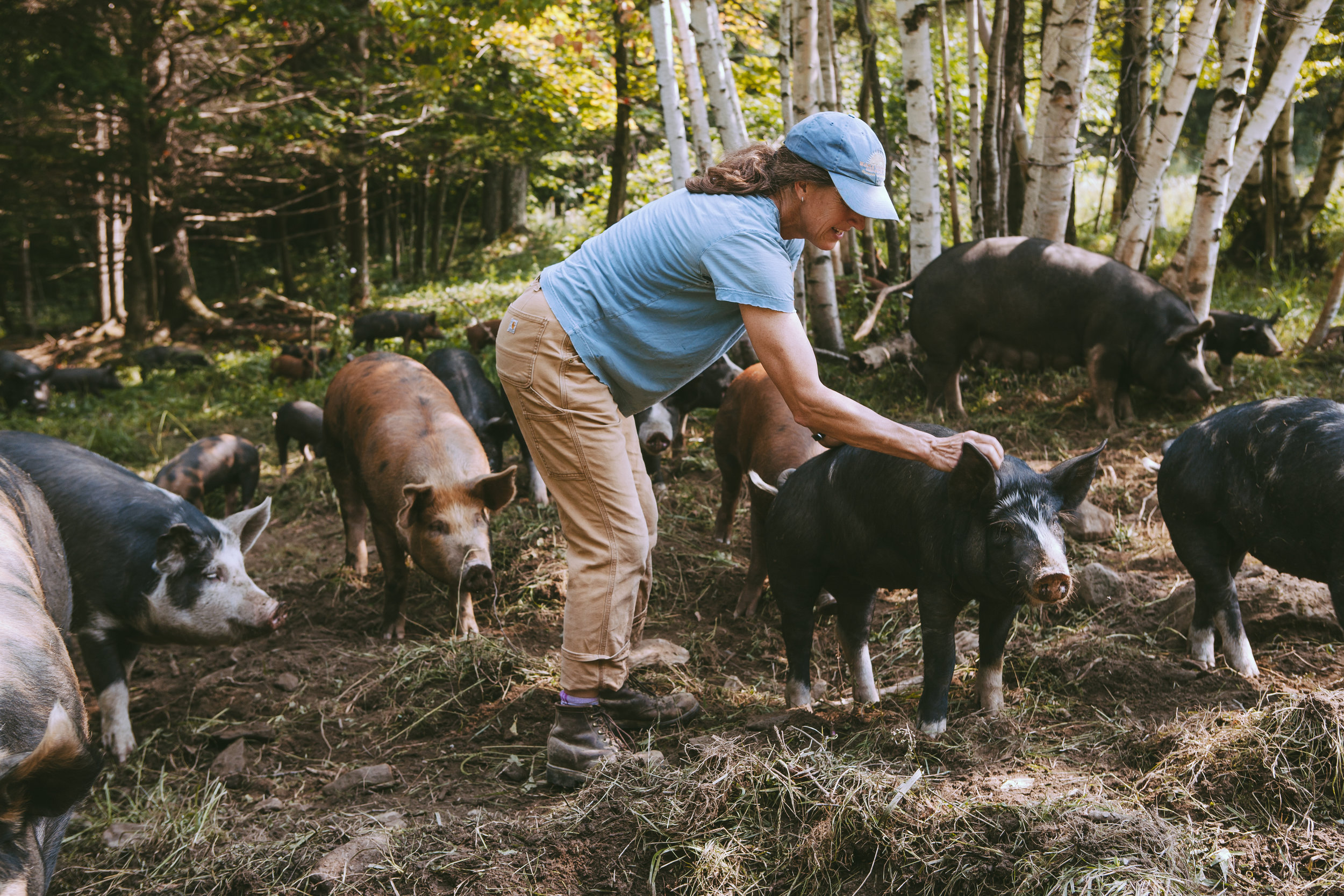 Beth Whiting and her heritage breed pigs at Maple Wind Farm