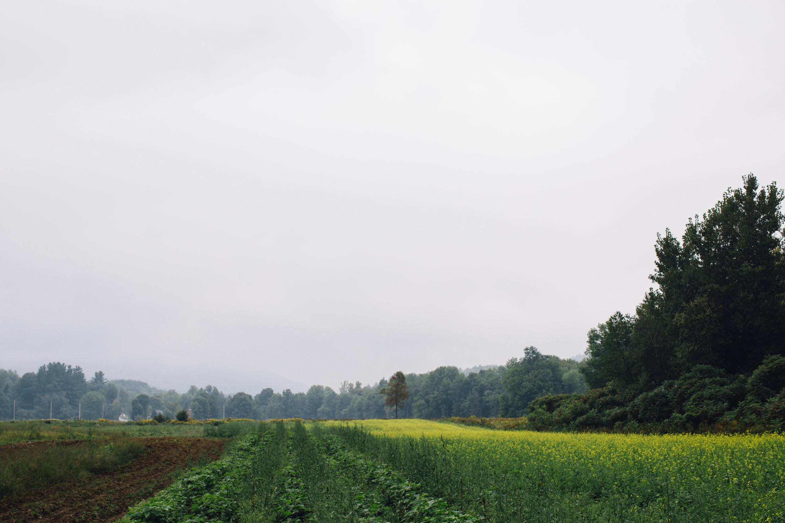 Fields at Valley Dream Farm