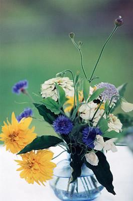 Stray Cat Flower Farm Baby Blue Bouquet