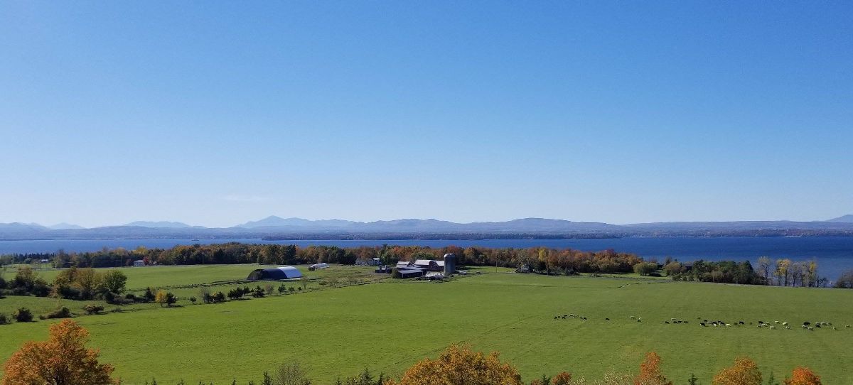 Health Hero Farm's barn, pasture, and herd in South Hero, Vermont